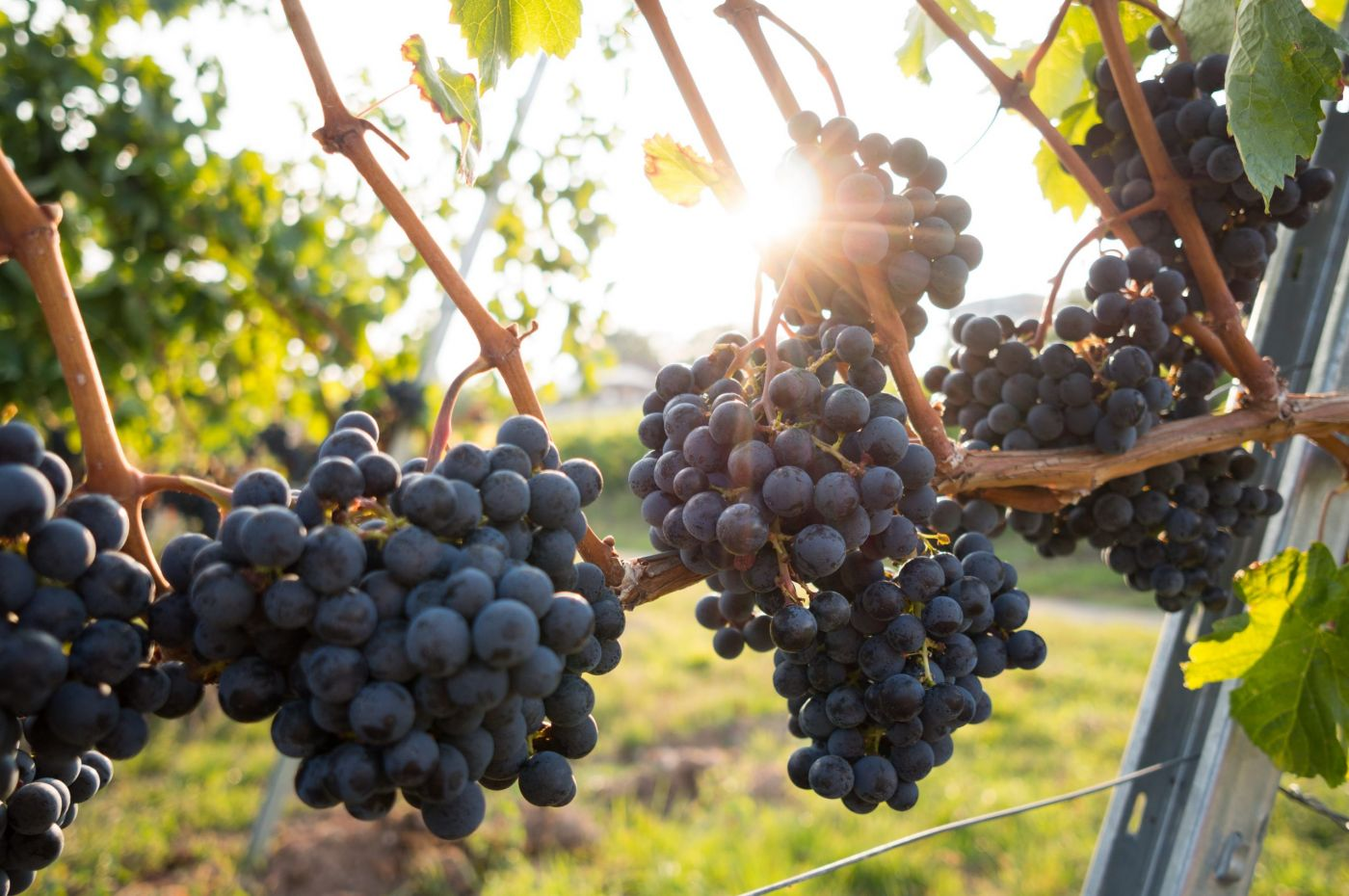 Cortona Wine Tour