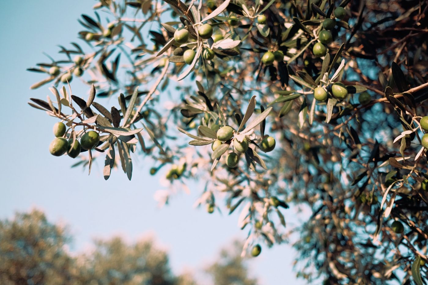 Menu For Olive Garden: Together In Tuscany & Umbria