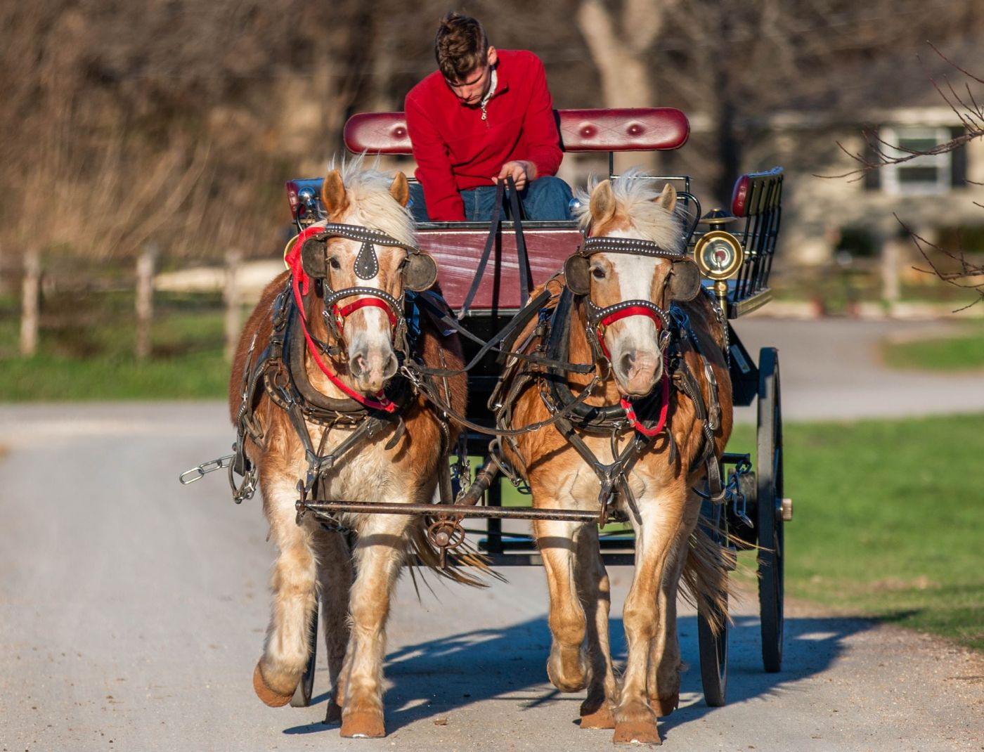 horse drawn carriage tour together in tuscany umbria