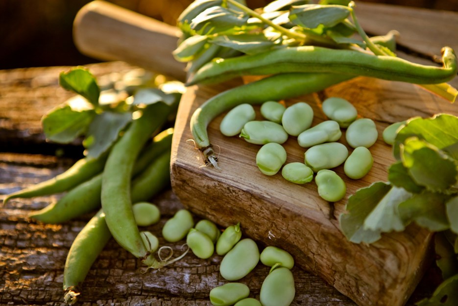 How to eat fava beans like the Italians